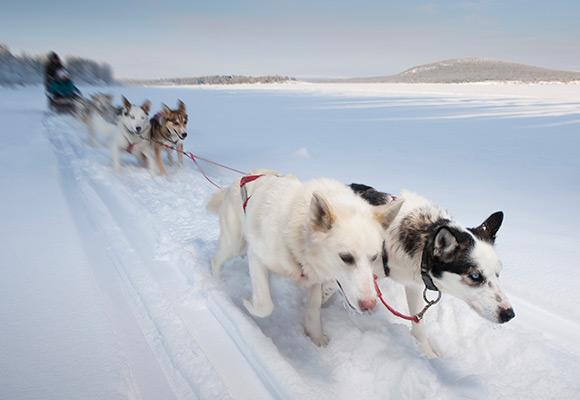 Hundspann i Jukkasjärvi